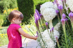 Toddler examines flowers in Niagara Falls Botanical Gardens.