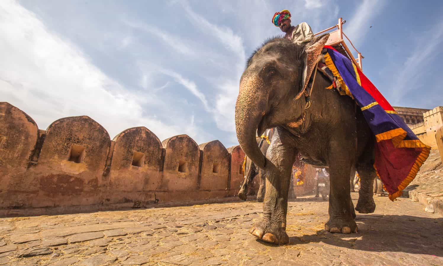 Elephant heading down hill without passengers as per new regulations to protect elephants in Jaipur, India - one of the most popular Jaipur attractions.