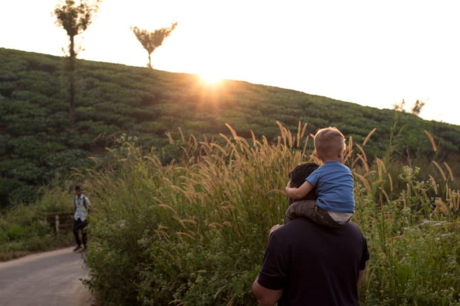 Father walks towards the setting sun in an Indian Tea plantation