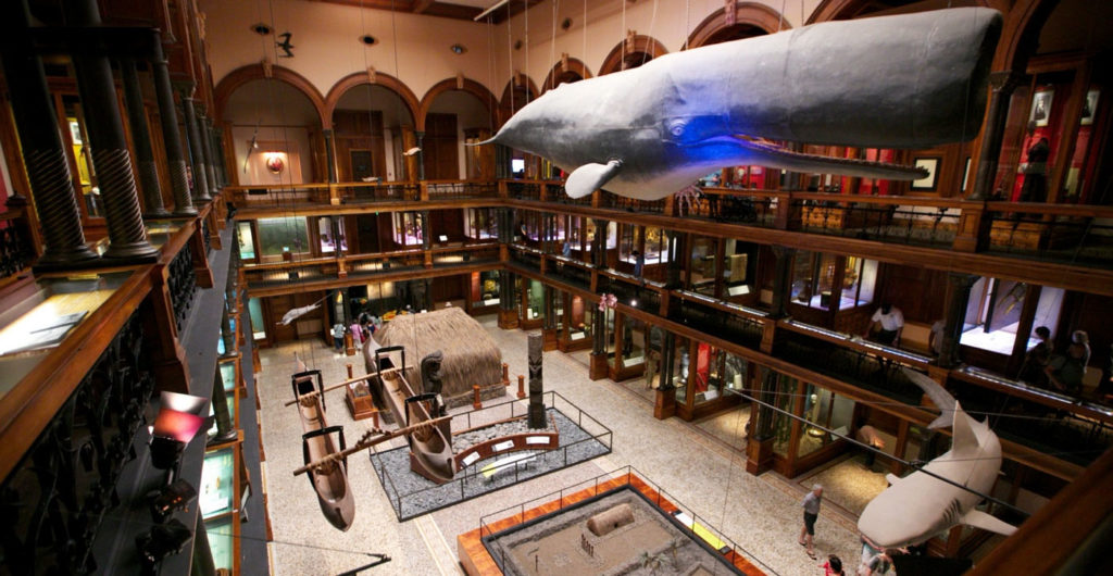 Bishop Museum in Honolulu Hawaii. Indoor activities Oahu