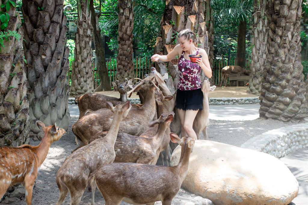 The deer were a little rowdy while I fed them veggies in the morning. Things to do in Bali.