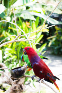 Bird perched on a ledge look around, you might see some animals roaming freely at the bali zoo!
