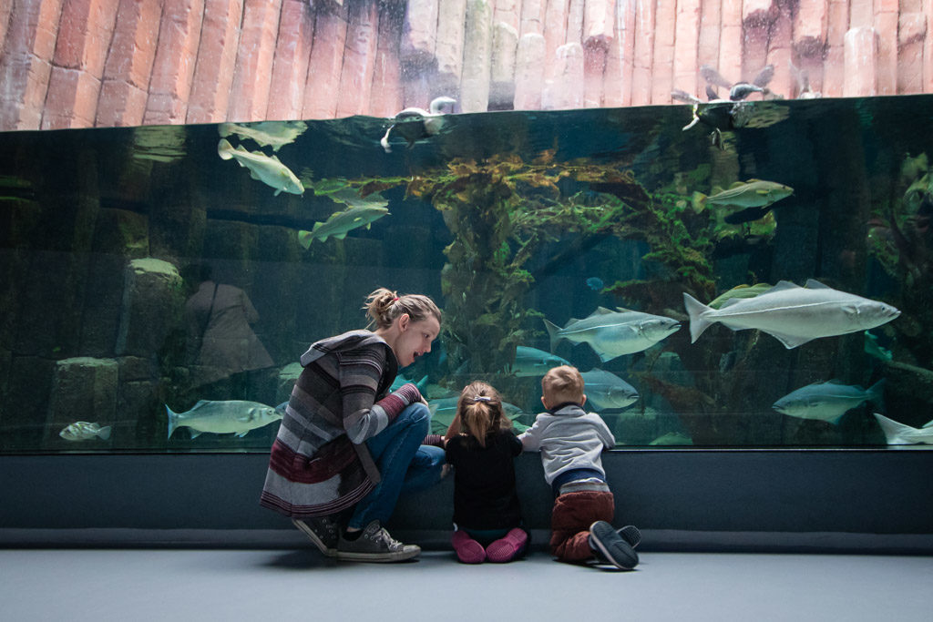 Bother kneels next to twin toddlers at the Aquarium in Copenhagen.