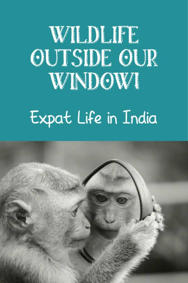 Wildlife right outside our window! Stories from an expat living in #India....... #expatlife #lifeinindia #india #incredibleindia