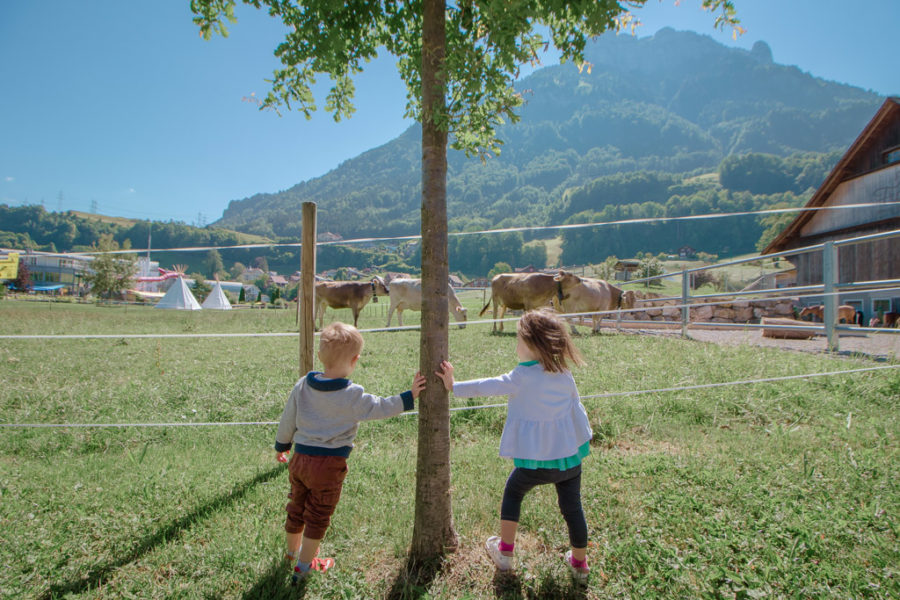 Two toddlers watch the cows at the the morschach swiss holiday park