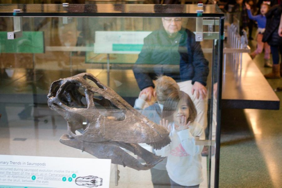 Toddler smushes her face to see a dinosaure skeleton at the American History Museum