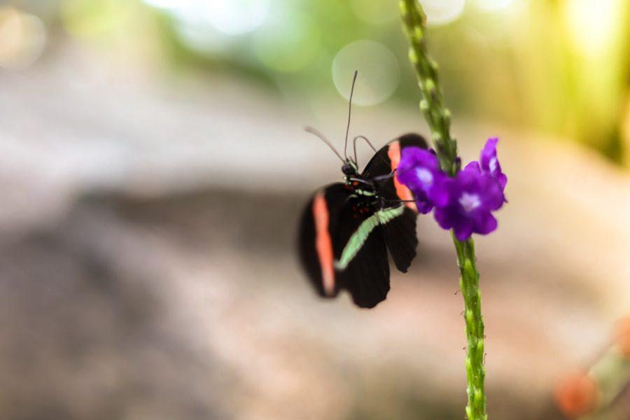 Butterfly lands on flower in botanical garden.
