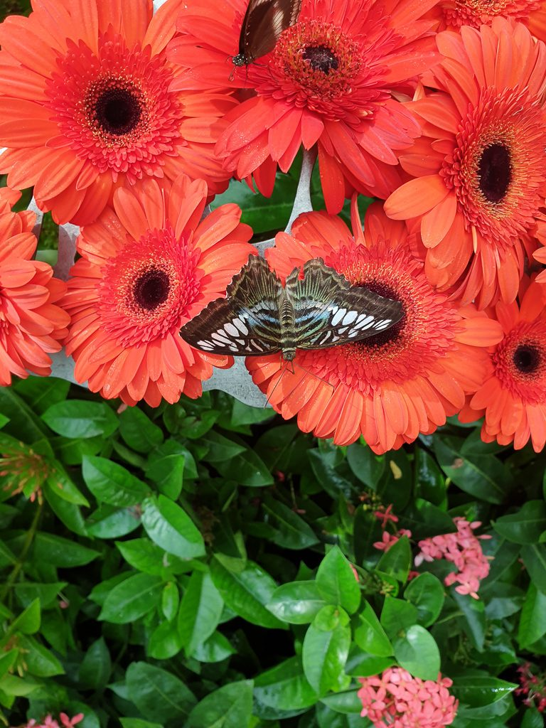 Butterfly sits on flowers.