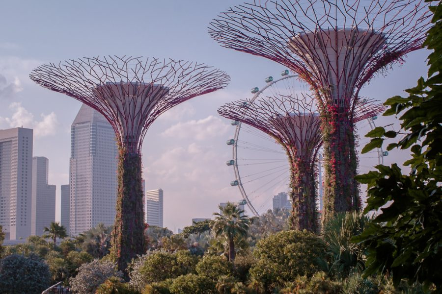 Tall artificial trees comprise the Gardens by the Bay. Observation wheel in the center/