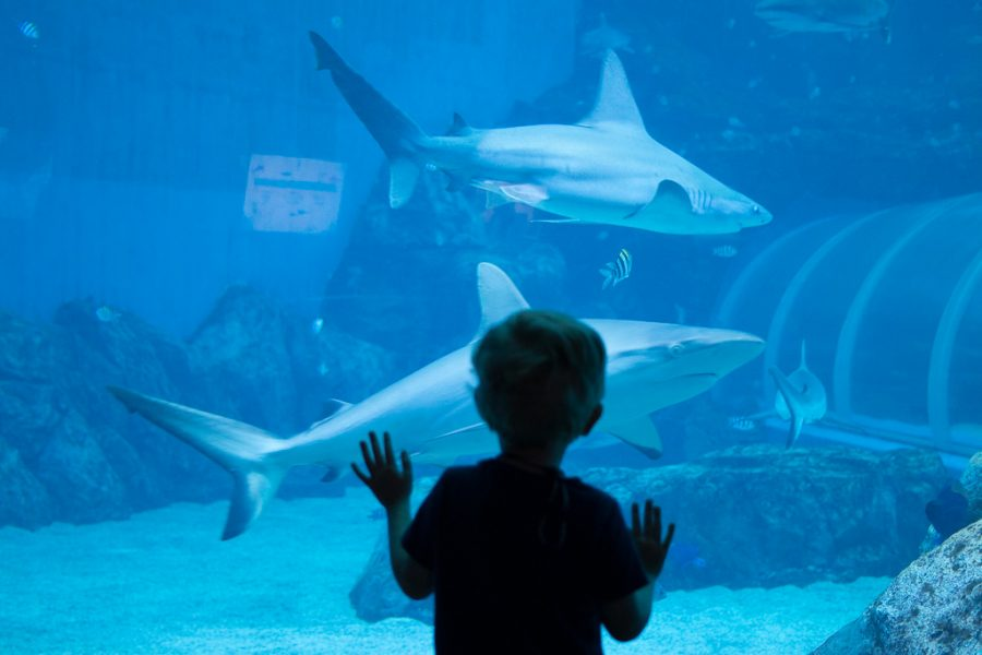 Toddler stares at the shark enclosure at the aquarium in Singapore.